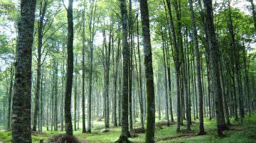 La vacanza tra i boschi riduce lo stress