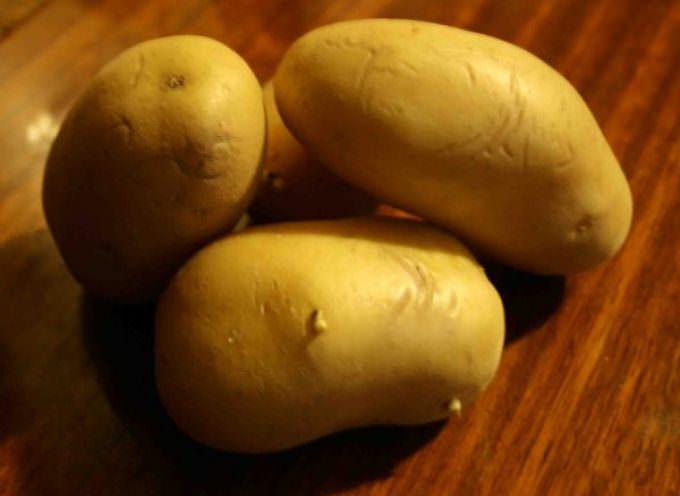 Confagricoltura: il via libera alla varietà di patate OGM