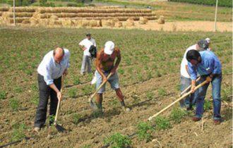 Operai agricoli: ecco come l'Inps risolve il contenzioso sulla pelle dei pensionati