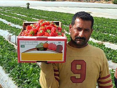 Immigrati: il direttore generale della Confagricoltura, Vito Bianco, l'agricoltura ha bisogno di loro