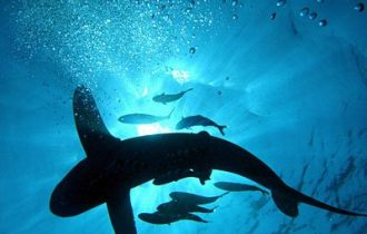 Fisheries advisory panel offers recommendations on CITES proposals