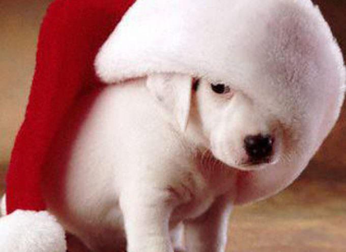Come preparare i nostri amici animali alle feste natalizie