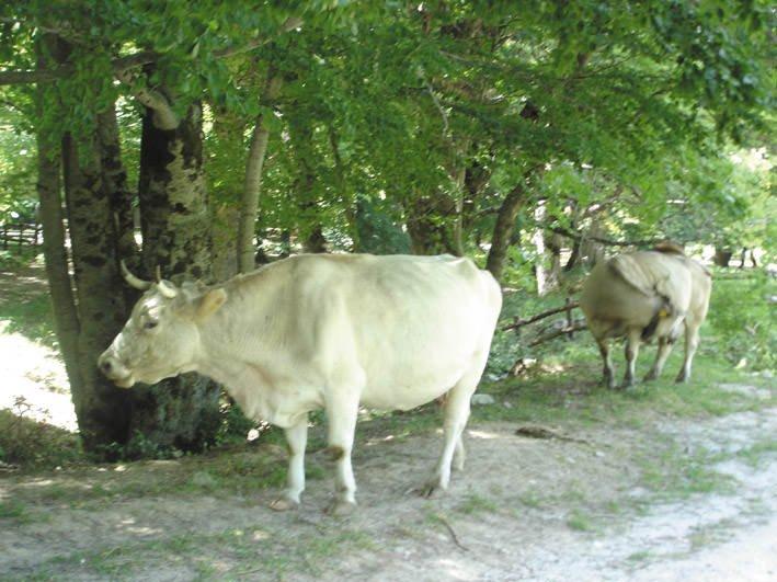 Latte: Coldiretti, in guerra allevatori rischiano 43 mila stalle