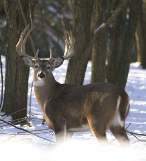 """""""Fauna in grave difficoltà, stop alla caccia"""""""