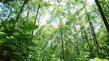 Torino: Finanziamenti per chi pianterà alberi e boschi
