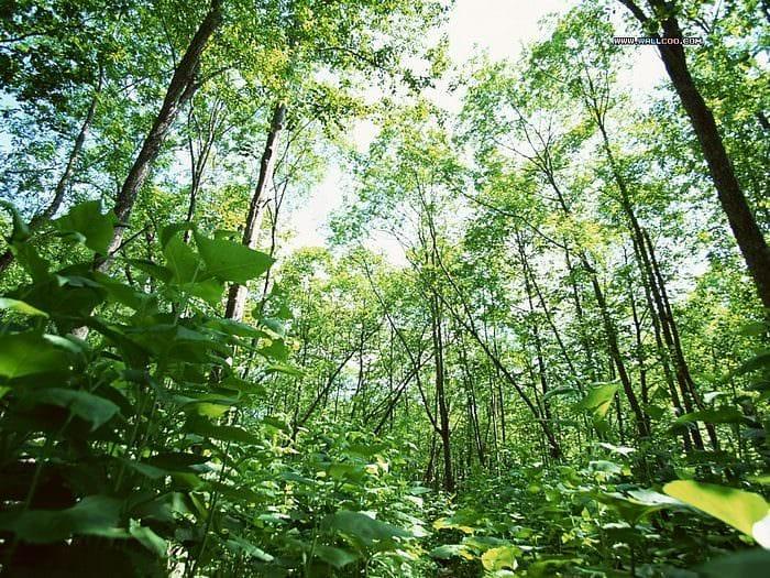 Aumentano i boschi in Italia!