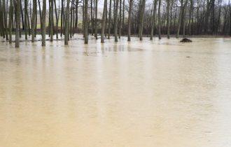 Maltempo: Coldiretti, sott'acqua 3 mila ettari di campi toscani coltivati