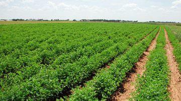 Veneto: 164 milioni di euro in sostegno alle aziende agricole