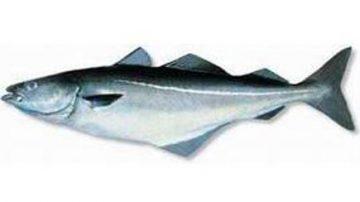 Truffa del merluzzo, il 40% delle etichette dà false informazioni