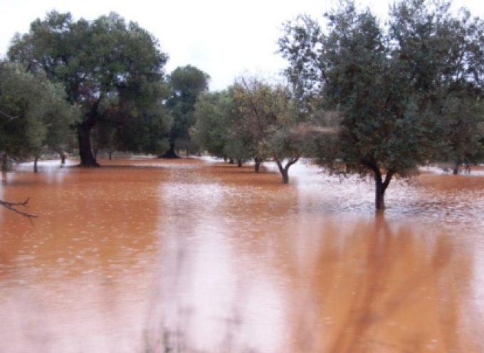 Maltempo: campagne allagate, molte aziende agricole isolate