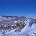 Sotto la neve pane, e speculazioni dei prezzi alimentari