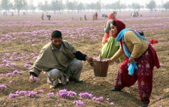Lavoro stagionale: Al via gli ingressi per 80 mila extracomunitari