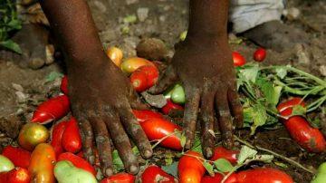 Agricoltura: Un futuro senza caporalato