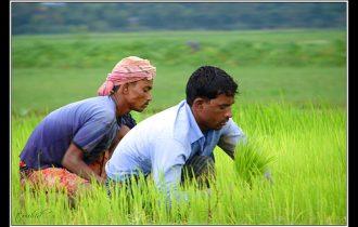Agricoltura: Aumenta la crisi, cresce il lavoro nero