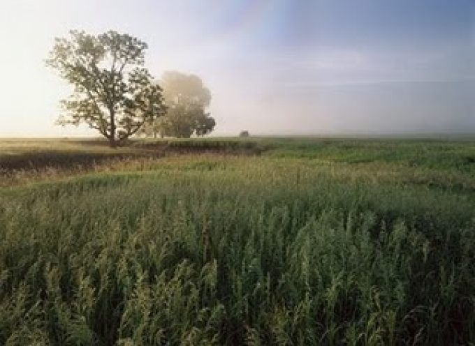 Fighting climate change with grasslands