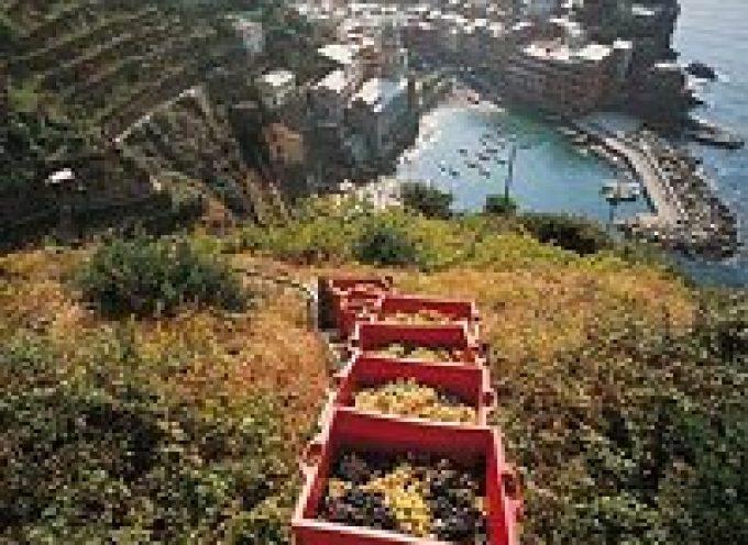 Vino: Cinque Terre, è un'annata da ricordare