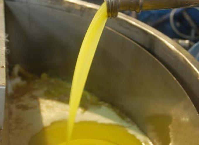 SIAN: l'olio italiano è più o meno tutelato?