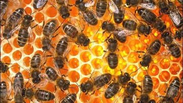 Trieste: Disegno di legge per la disciplina e la promozione dell'apicoltura