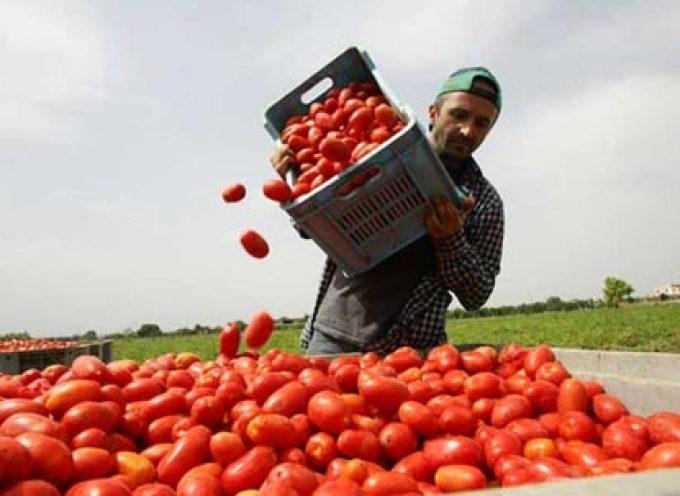 Immigrati: una risorsa importante per il lavoro in agricoltura