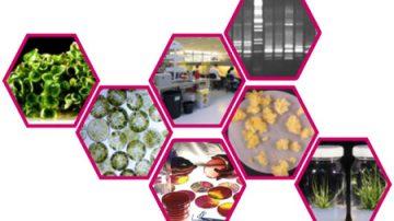 Confagricoltura: le norme sulla coesistenza bloccano le biotecnologie anzichè sdoganarle