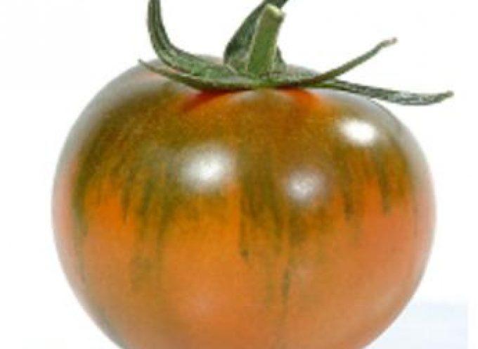 Torino: Nei supermercati torna il pomodoro Camone, eccellenza della Sardegna