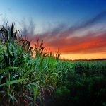 Agricoltura: De Castro esprime solidarietà agli agricoltori