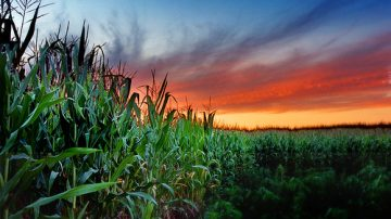 Cia: Emergenza agricoltura!