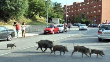 Incidenti con animali selvatici? Paga la provincia