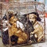 Cina. Una legge contro la carne di cane e gatto