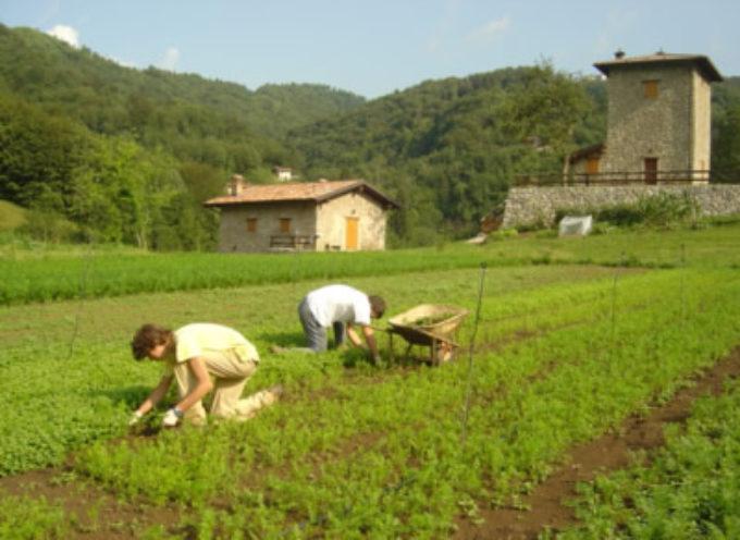 Manovra: Coldiretti, 2 anni e mezzo per aprire un'impresa agricola
