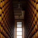 Terre del Parmigiano, obiettivo riconoscimento UNESCO