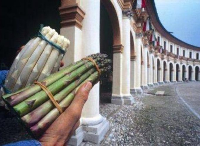Veneto: L'Asparago di Badoere in lista per l'Igp