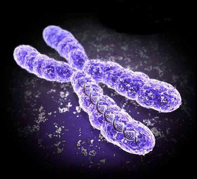 Identificato un gene portatore della sclerosi laterale amiotrofica