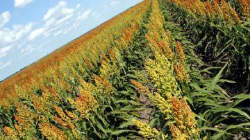 OGM: Marini (Coldiretti), bene norme in attesa referendum