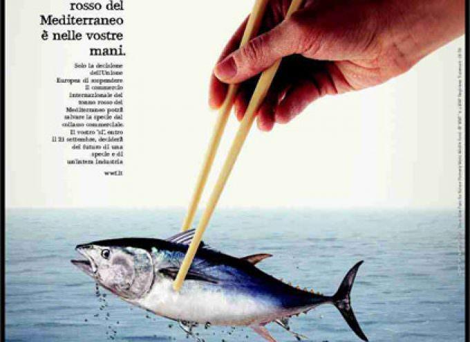 Pesca: La moratoria del Tonno rosso è doppiamente sostenibile