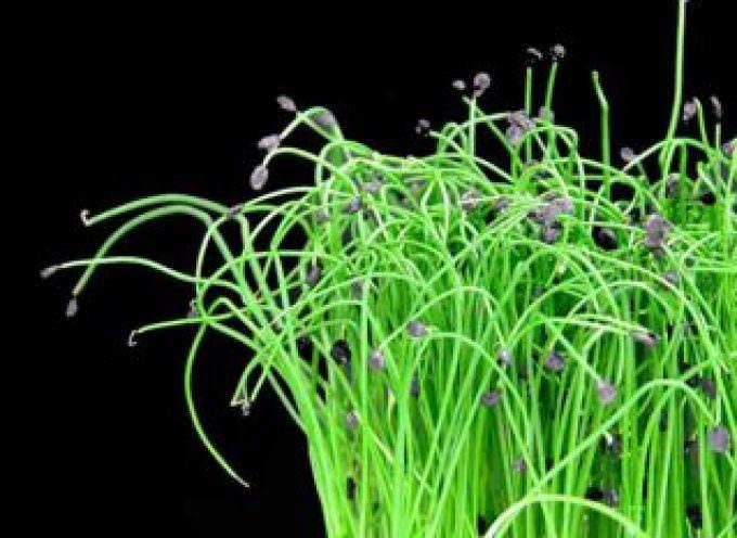 Enrico Zallot: l'uomo che parla alle erbe aromatiche