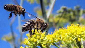 Il Piemonte approva il programma triennale per l'apicoltura