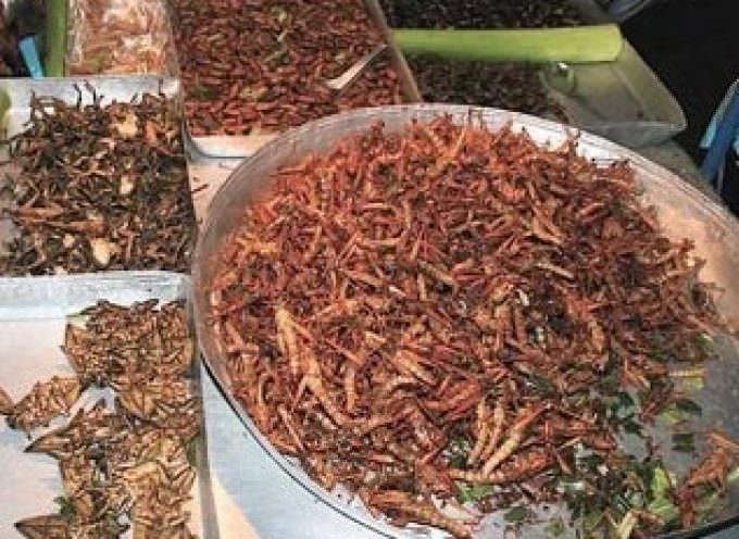 Gli insetti: cibo alternativo contro i problemi alimentari