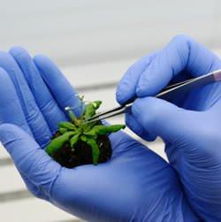 Confagricoltura: sugli OGM pericoloso alzare il tono dello scontro ideologico