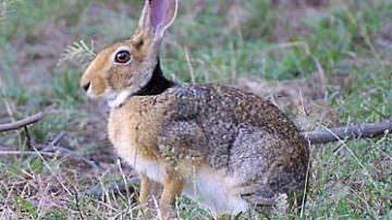 Terni: Piano di ripopolamento delle lepri
