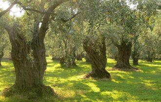 """""""Pic & Nic a Trevi"""": arte, musica e merende tra gli ulivi"""