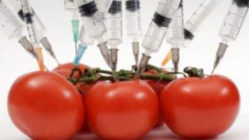 OGM: Coldiretti, 8 italiani su 10 contrari al loro utilizzo