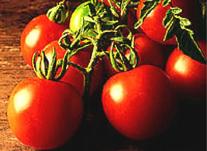 Ogm: bene l'etichetta trasparente, tutela consumatori e agricoltori