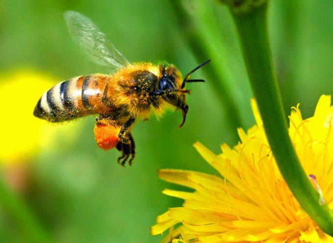 Api o mais? Meglio api e mais: convegno