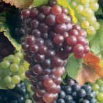 Tè verde, uva, spezie: un trio contro i batteri degli alimenti