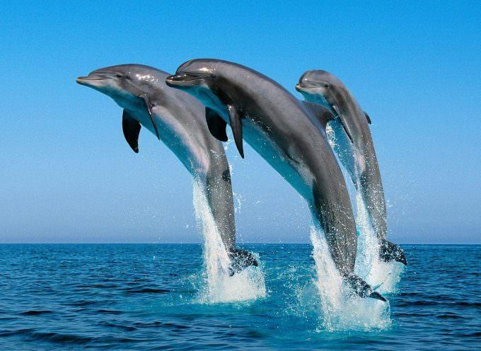 Studiare i delfini per guarire il diabete
