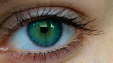 Mirtilli e pino: insieme proteggono gli occhi
