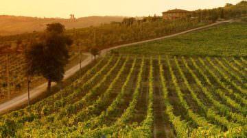 Arriva la Guida per le 21 Strade del vino, dell'olio e dei sapori della Toscana