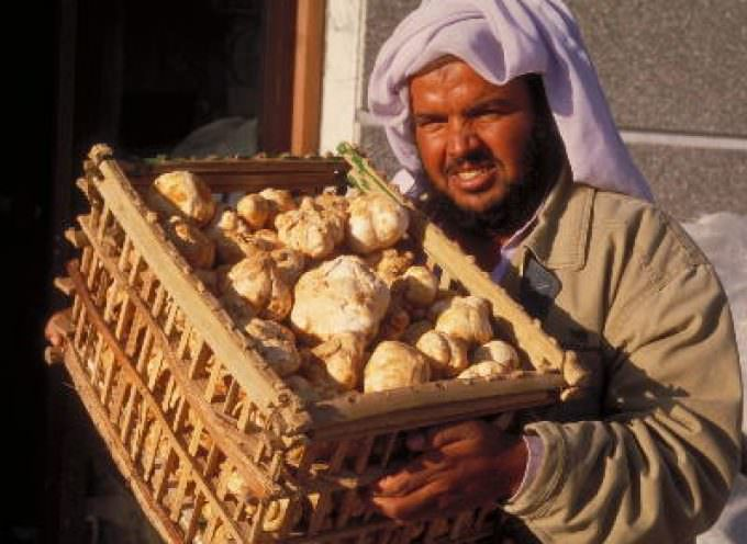 Frodi alimentari. L'invasione del tartufo d'Africa – Terfezia