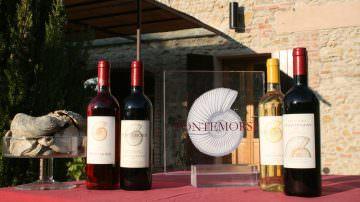 Vin Natur: Fontemorsi presenta la sua piccola produzione di grande qualità